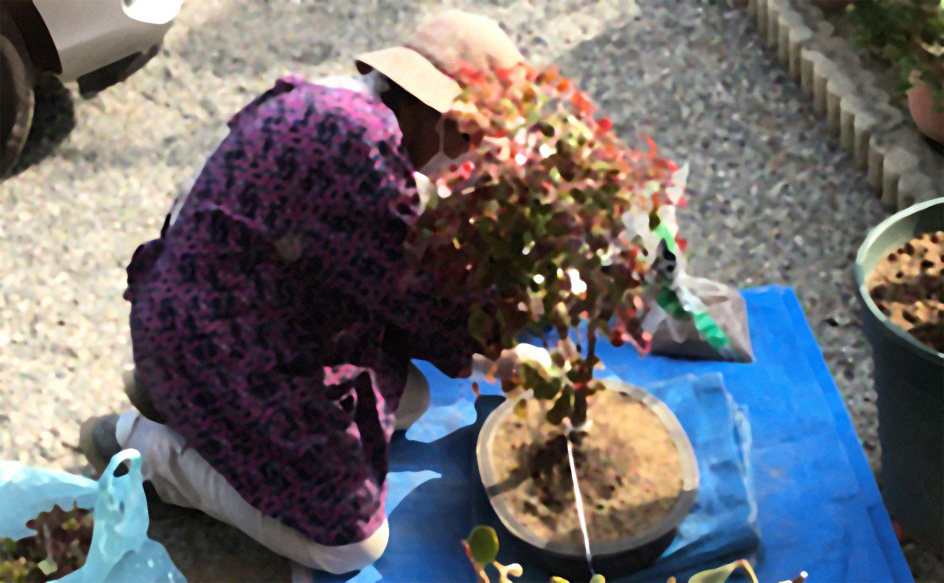 おばあちゃんの庭仕事
